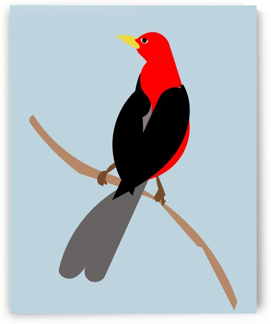 Scarlet TANAGER by Sarah Butcher