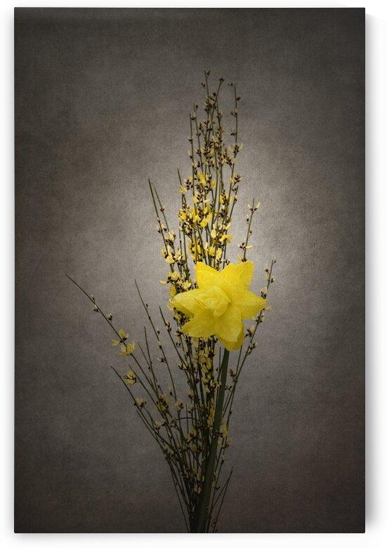 Spring bloomer - Genista and daffodil | vintage style  by Melanie Viola