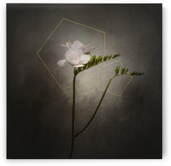 Graceful flower - Freesia | vintage style gold  by Melanie Viola
