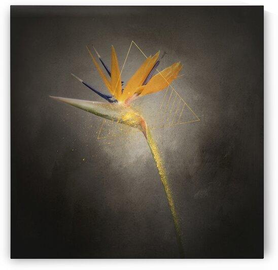 Graceful flower - Strelitzia | vintage style gold splashes  by Melanie Viola