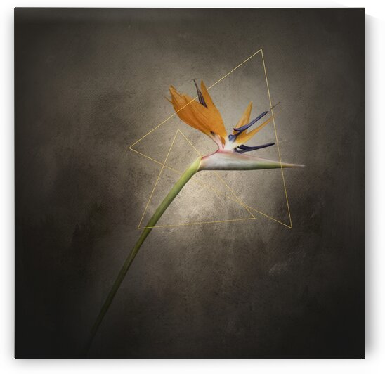Graceful flower - Strelitzia | vintage style gold  by Melanie Viola