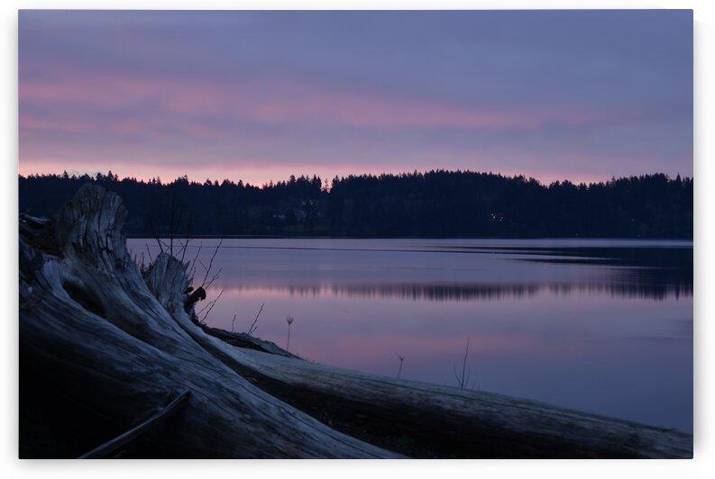 Bayside Near Driftwood During Dawn by PieLar Inspirations