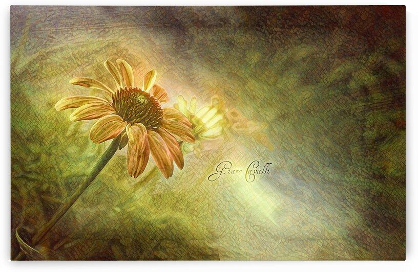 Art106flowAGC408826000 by Ani Giaro Cavalli