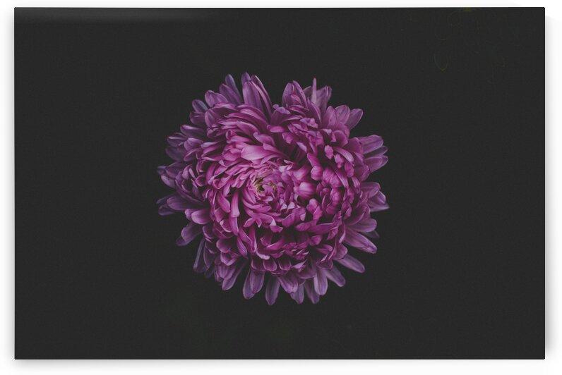 Purple Beautiful Bloom Blooming Blossom Blur by 7ob