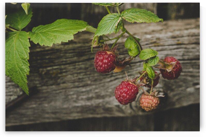 Berries Focus Leaves Nature Raspberries Soft by 7ob