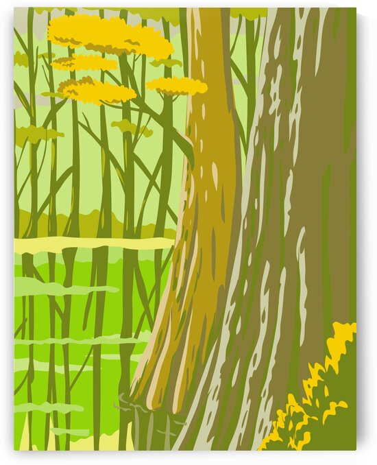 Congaree National Park by Artistic Paradigms