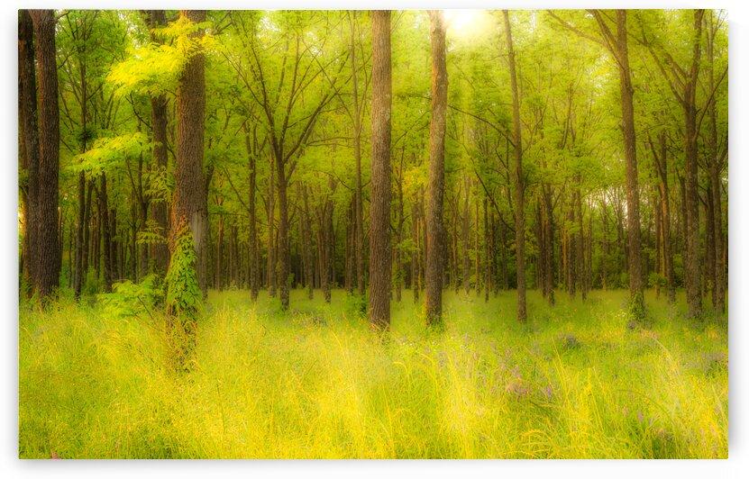 Rock Creek Park Sunlit Forest  by Diane Lynn