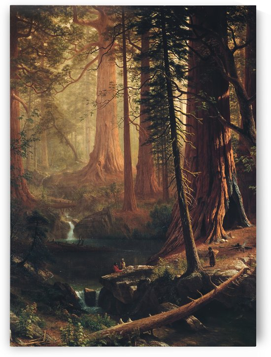 Giant Redwood Trees of California by Albert Bierstadt