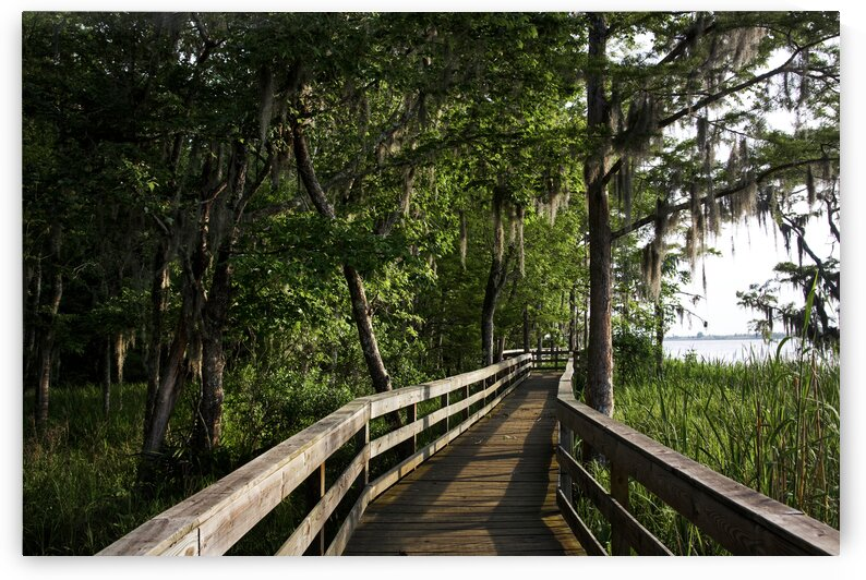 Historic Blakeley State Park Located On The Tensaw River Is Very Lush In The Summertime. by 7ob