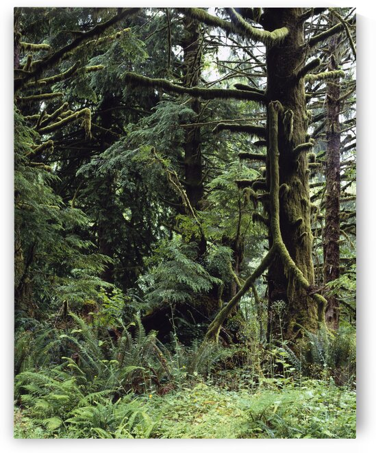 Olympic National Park. by 7ob