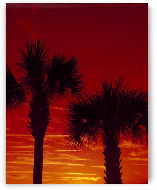 Palm trees at sunset. by 7ob