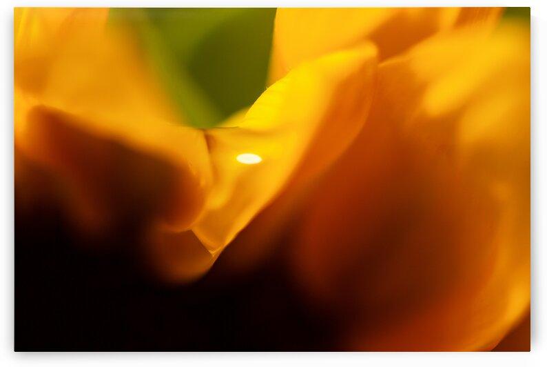 Sunflower waterdrop by Katharine Asals Photography
