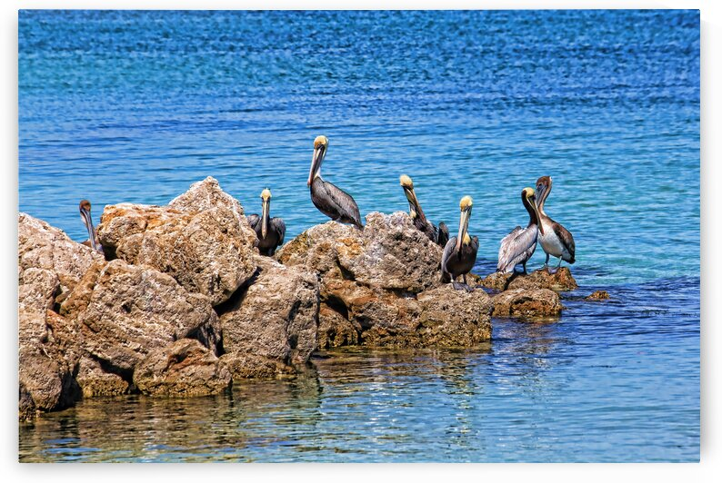 The Gang Of Seven by HH Photography of Florida