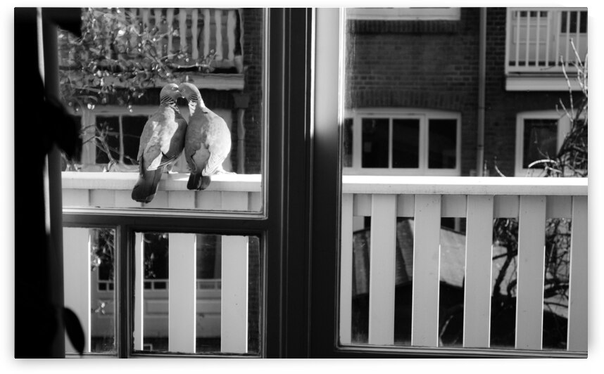 Black And White City Cute Love Nature Birds Outside Pigeon Balcony by 7ob
