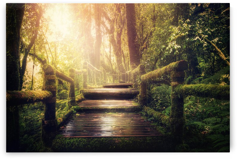 Jungle Trees Travel Holiday Mysterious Light Mood Magical Fairy Tale Moss Mystical Nature by 7ob