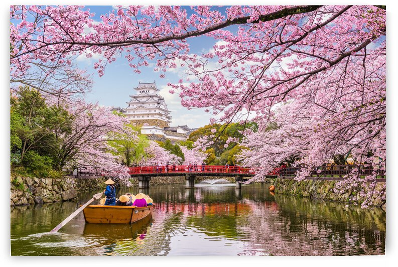 Japan Waterway Flower Spring Blossom Cherry Plant Tree Pink Branches by 7ob