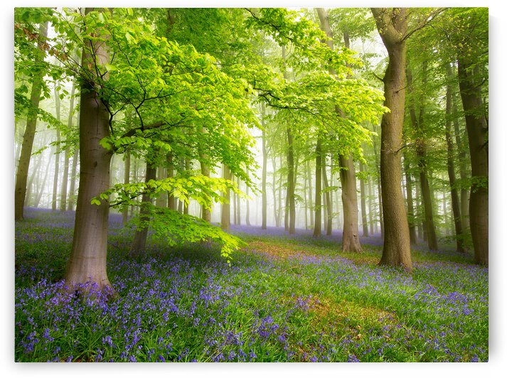 Spring Forest Natural Landscape Trees Green Woodland Forest  Natural Environment by 7ob
