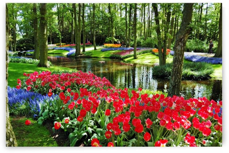 Flowers Natural Landscape Garden Plant Botanical Spring Garden by 7ob