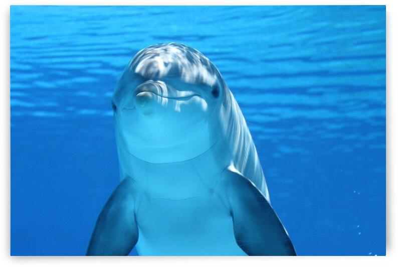 dolphin 203875 1280 by Saqib Pervaiz