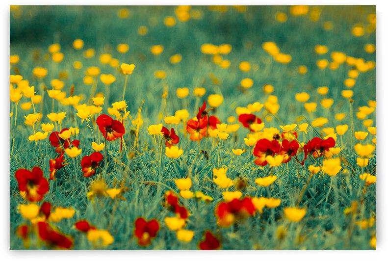 Flowers by Giulio Bardelli
