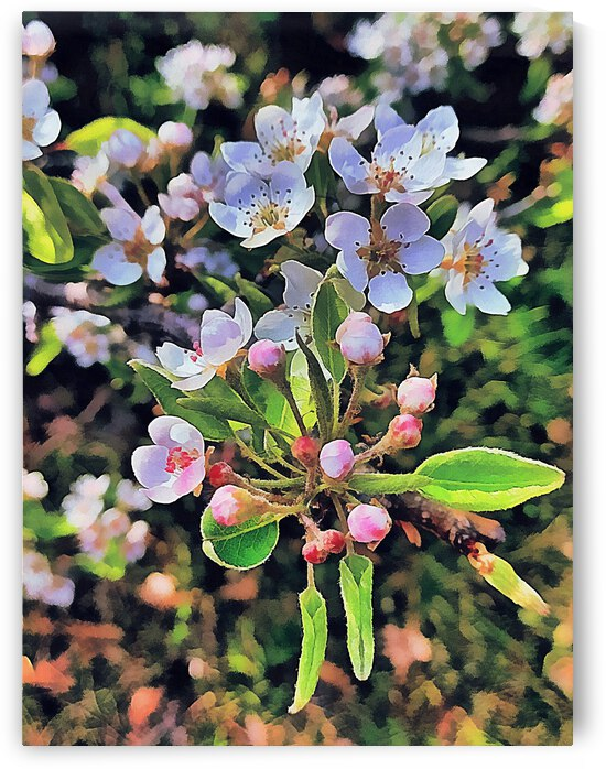 Beautiful Pear Blossom by Dorothy Berry-Lound