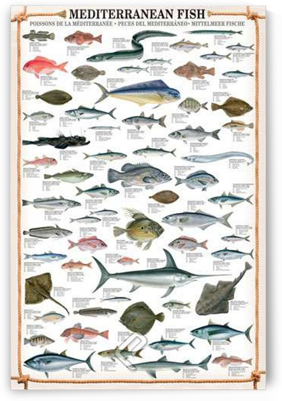 Mediterranean Fish by VINTAGE POSTER