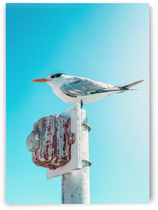 Seagull by KARNIVALKING