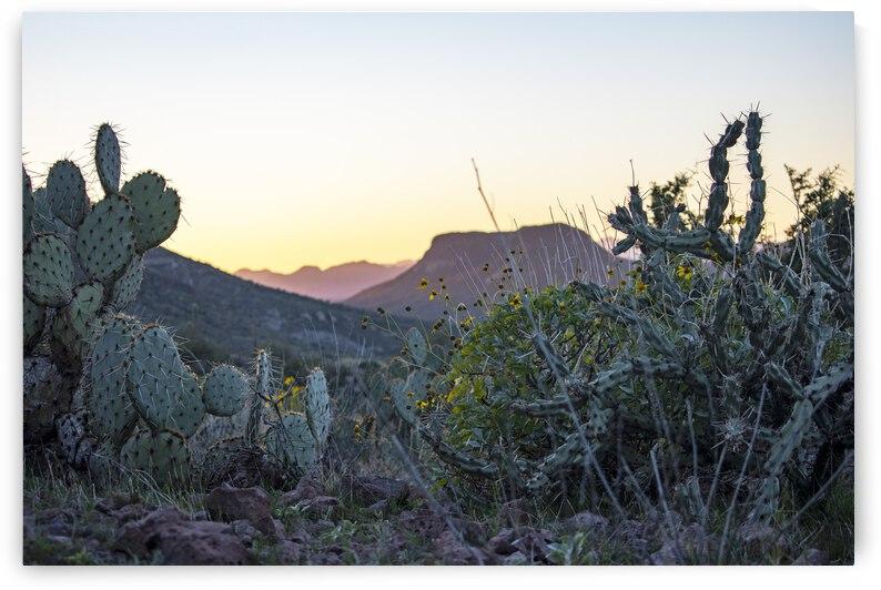 Black Canyon Greenery by Richard Weisenberger