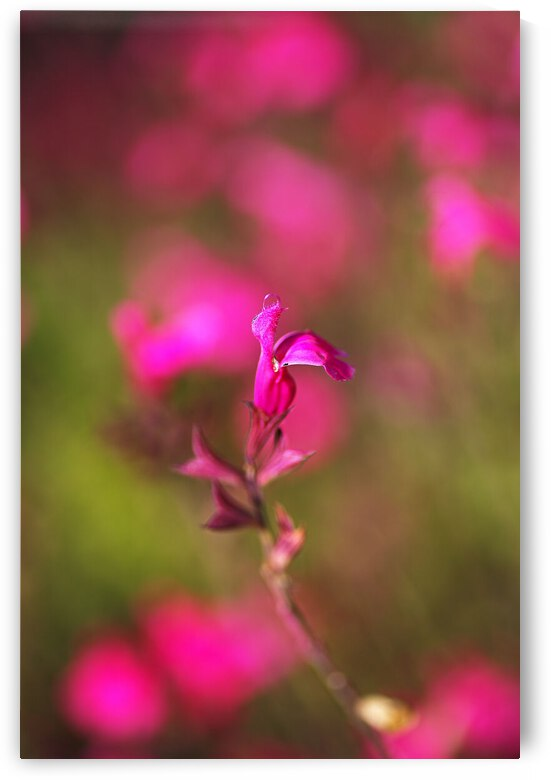 Wendys Wish Sage Flower Pink by Joy Watson