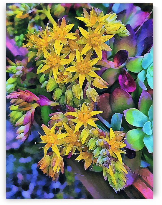 Echeveria Hybrid With Yellow Flowers by Dorothy Berry-Lound