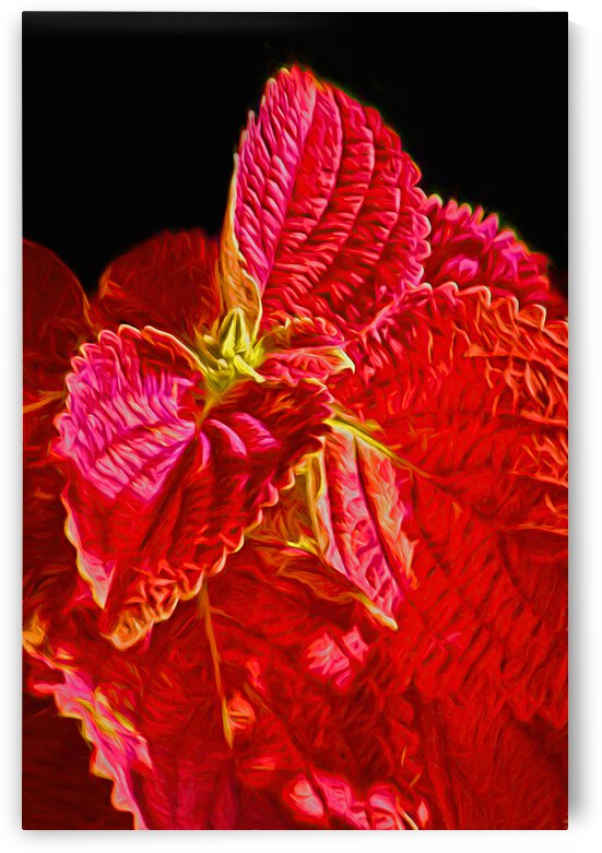 Coleus Glow by HH Photography of Florida