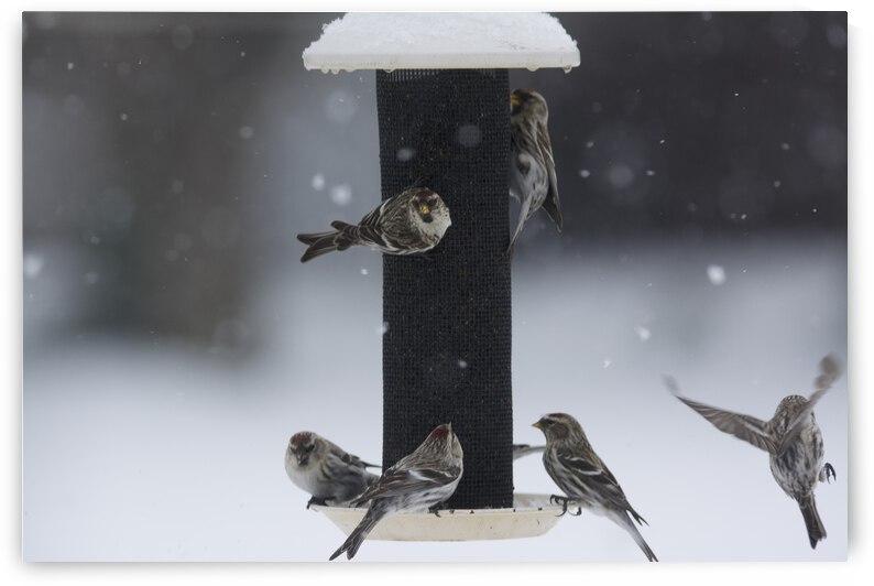 Busy Bird Feeder by Jerrid Lavoie