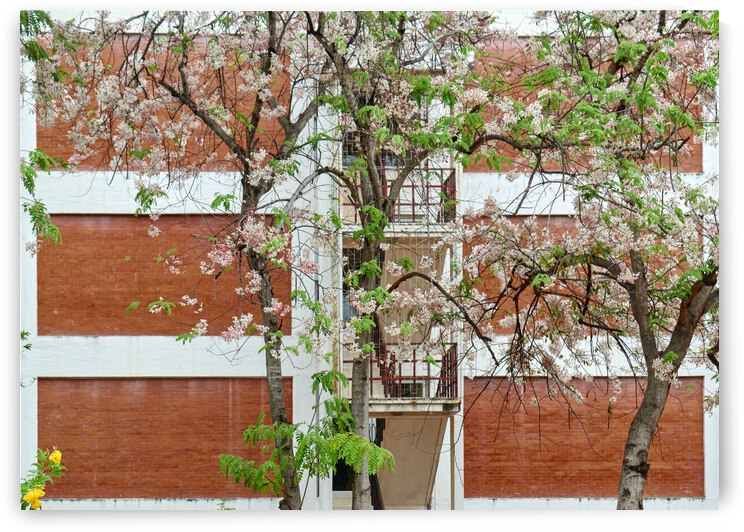 The flowers blooming on the big tree nearby a big building in the urban by Krit of Studio OMG