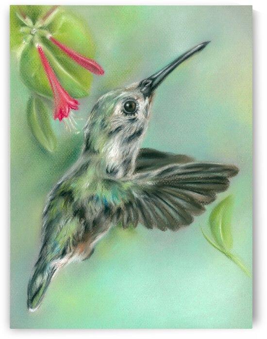 Hummingbird in Flight Near Honeysuckle by MM Anderson
