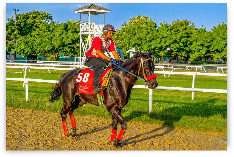 Racehorse01 by Eric Franks Photography