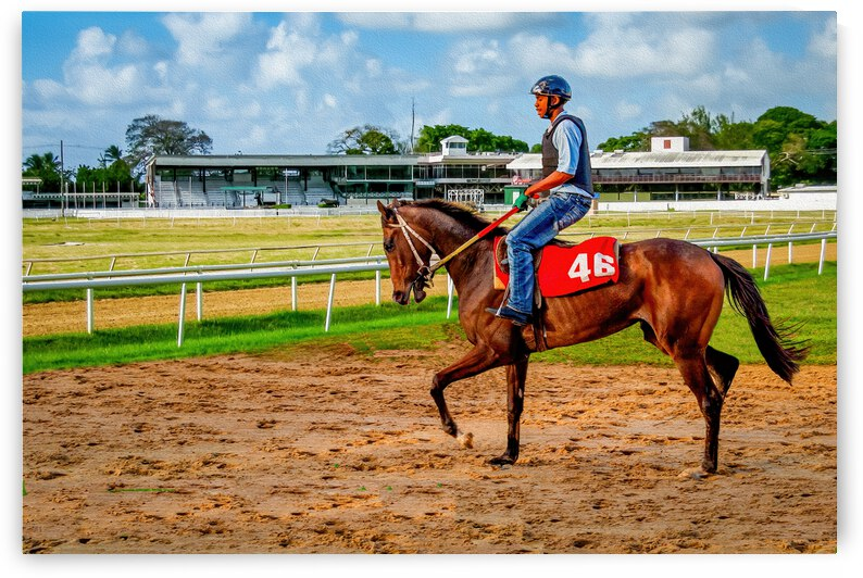 Racehorse04 by Eric Franks Photography