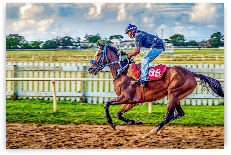 Racehorse09 by Eric Franks Photography