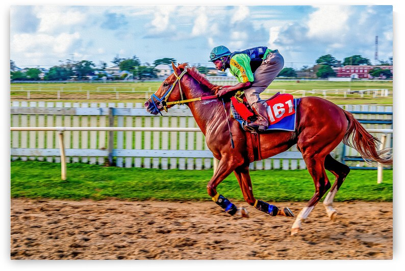 Racehorse10 by Eric Franks Photography