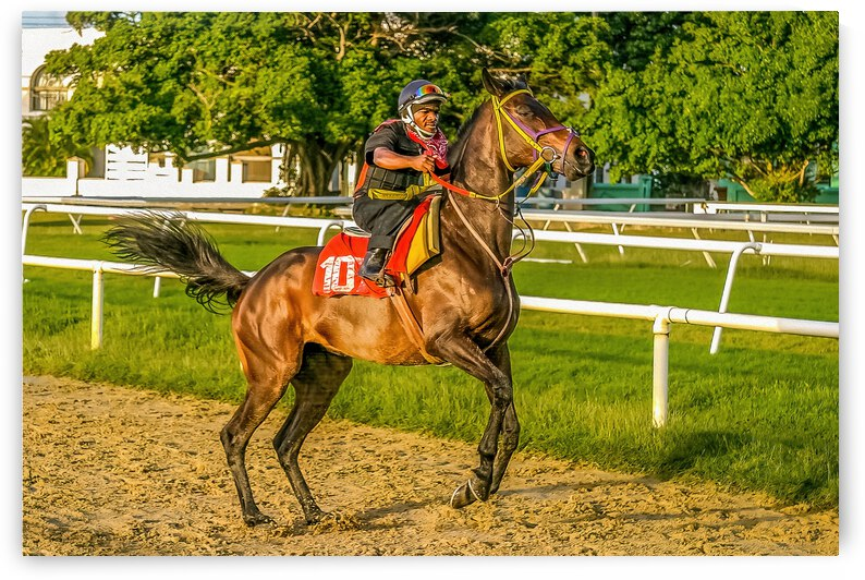 Racehorse12 by Eric Franks Photography