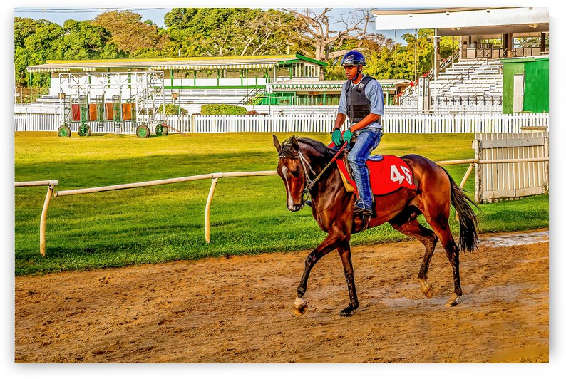 Racehorse03 by Eric Franks Photography