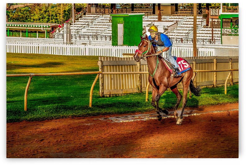 Racehorse02 by Eric Franks Photography
