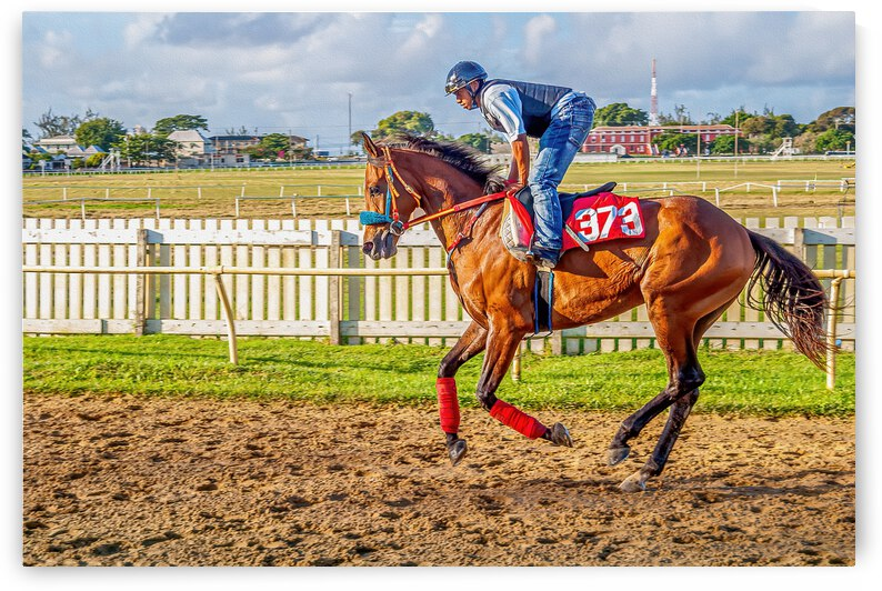 Racehorse06 by Eric Franks Photography