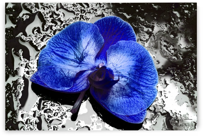 Blue Orchid on Wet Glass 3x2 by Veratis Editions