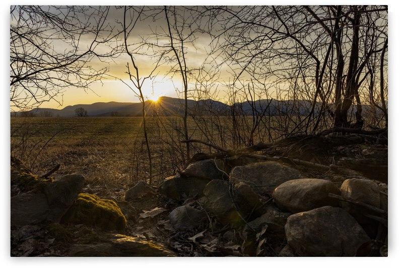 Springburst by Dan Palance