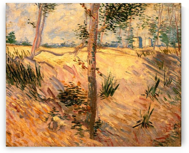 Trees in a Field on a Sunny Day by Van Gogh by Van Gogh