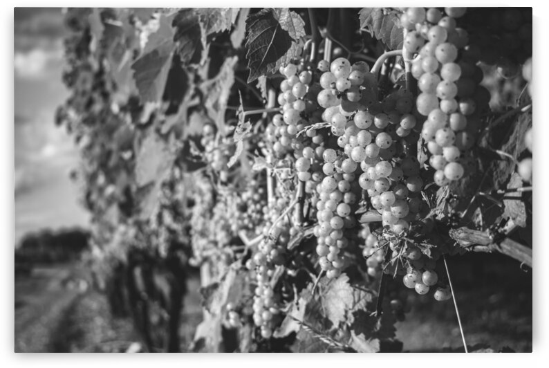 Wine About It by Richard Weisenberger