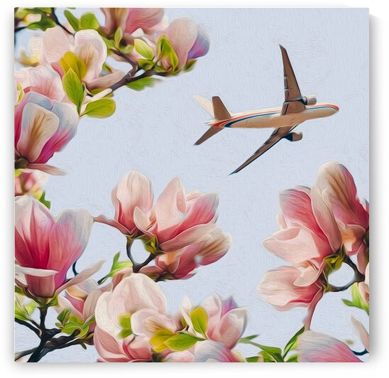 View of a flying plane through the branches of a blooming magnolia.   by Ievgeniia Bidiuk