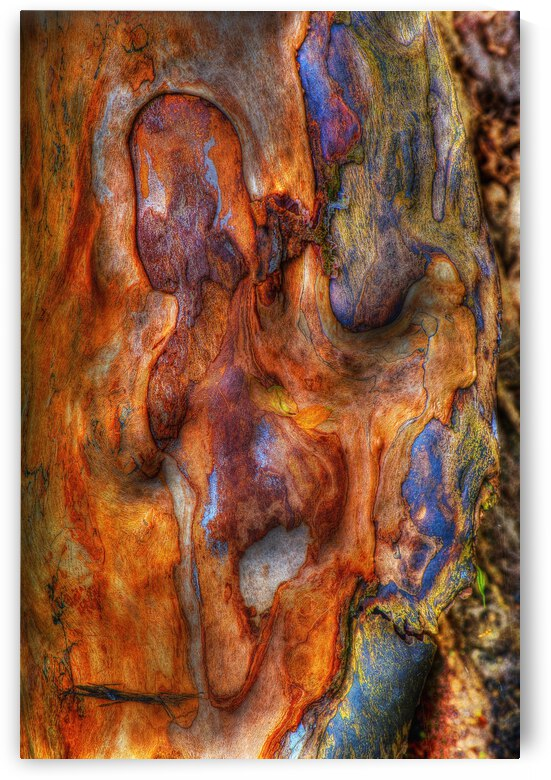 Ecorce by Christian Bibeau