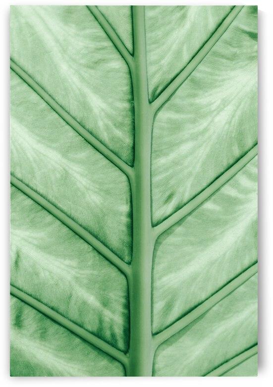 Pastel leaf veins by Andreea Ligia