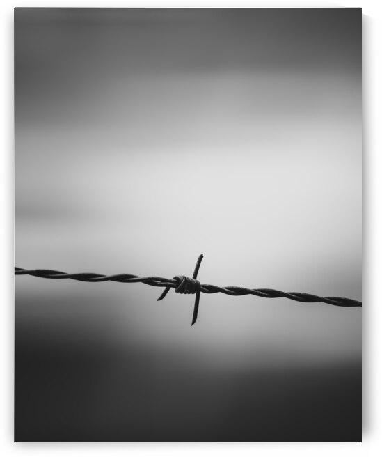 Twisted by Bob Orsillo